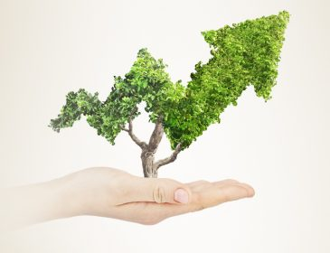 Demystifying Sustainability Reporting: What's Real and What's Not