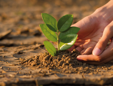 Accountants: Changing the Course of Climate Change
